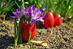 eggs красный цвет стоковое фото