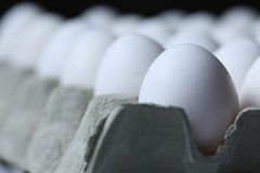 eggs много белизна Стоковые Фото