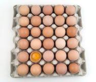 eggs множество Стоковая Фотография RF