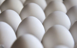 eggs поднос стоковые фото