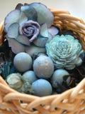 eggs робины Стоковая Фотография RF