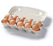 eggs свежий изолированный пакет 10 Стоковая Фотография