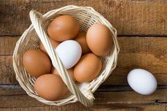 eggs сырцовое Стоковые Изображения
