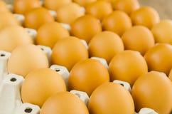 eggs сырцовое Стоковые Фотографии RF