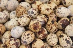 eggs триперстки Стоковые Изображения