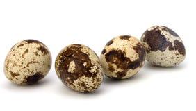eggs триперстки Стоковая Фотография