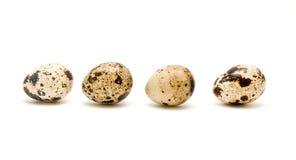 eggs триперстки Стоковое Фото