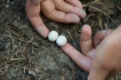 eggs ящерица Стоковое Фото