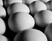 Eggs. Lined up in a straight row Stock Image
