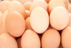 Eggs. Many white eggs close up Stock Photos