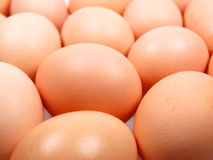 Free Eggs Stock Photography - 11566862