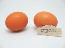 Eggs. 2 brown eggs one labled organic Stock Images