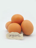 Eggs. Brown eggs one labled organic Stock Photography
