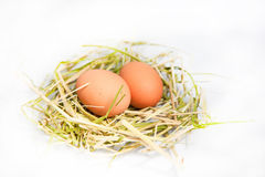 Eggs. Two eggs in a nest Royalty Free Stock Images