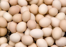 Eggs. Lots of chicken eggs in a container,color of light red whtie Stock Image