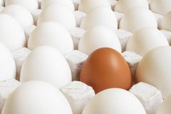 Eggs. Single brown egg in a carton of white eggs Royalty Free Stock Photo