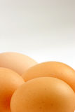 Eggs. Multiple Eggs against a white background Stock Images