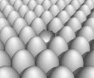 Eggs Stock Image