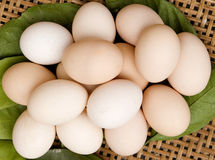 Eggs. Lots of chicken eggs in a container of fresh green leaves ,color of light red whtie Royalty Free Stock Images