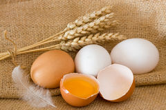 Eggs. Fresh eggs, feather and wheat ears Stock Image