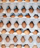 Eggs. Stock of eggs during an agricultural show Royalty Free Stock Photo