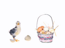 Eggs. Royalty Free Stock Photography