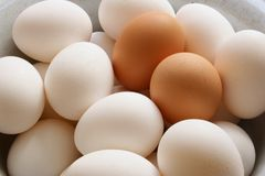 Eggs. A lots of white and brown chicken eggs close-up stock images