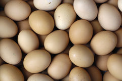 Eggs. Close up-Chicken eggs background Stock Photography