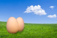 Eggs. Two free-range eggs on green grass against a blue sky Royalty Free Stock Image
