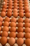 Eggs. Lots of brown chicken eggs on display. Shallow dof, focus is on the front row of the second box of eggs Royalty Free Stock Photography