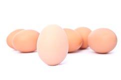 Eggs. Brown egg group  on white background Stock Photos