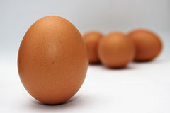 Eggs. Standing Egg in front of the other eggs Stock Image