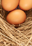 Eggs. Three brown chicken eggs in a straw nest Royalty Free Stock Images
