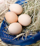 Eggs. Domestic eggs in wooden basket with hay Stock Image