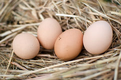 Eggs. Fresh domestic eggs in straw nest Stock Images