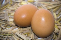 Eggs. On a bed of straw , natural , field Royalty Free Stock Image