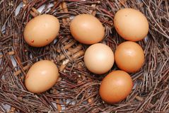 Seven eggs Royalty Free Stock Photography