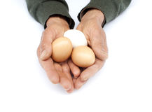 Old man holding eggs in hand. Some  brown and white organic egg in farmer hands on white background Stock Images