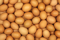 Free Eggs Stock Photography - 31336892