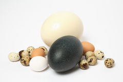 Eggs. Ostrich, emu, chicken, and quail eggs stock photos