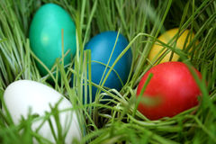 Eggs. Colored easter eggs royalty free stock photo