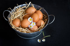 Eggs. On a black background Stock Images