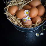 Eggs. On a black background Stock Photos