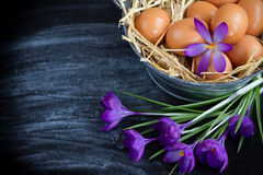 Eggs. On a black background Royalty Free Stock Images