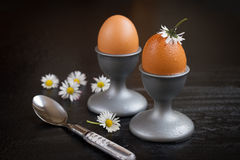 Eggs. Brown eggs in a cup on a black background Stock Images