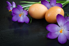 Eggs. On a black background Royalty Free Stock Photo
