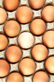 Eggs. Close up of many fresh eggs in the holder Royalty Free Stock Photography