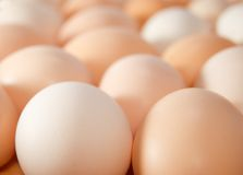 Eggs. Fresh eggs background close up royalty free stock images