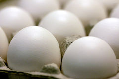 Eggs. In Cardboard Carton royalty free stock photography