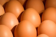 Eggs. Collection of eggs Royalty Free Stock Photos
